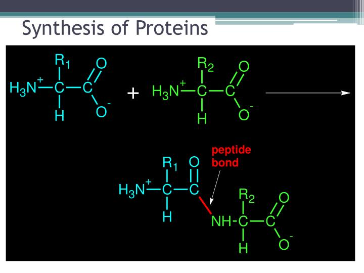 Synthesis of Proteins