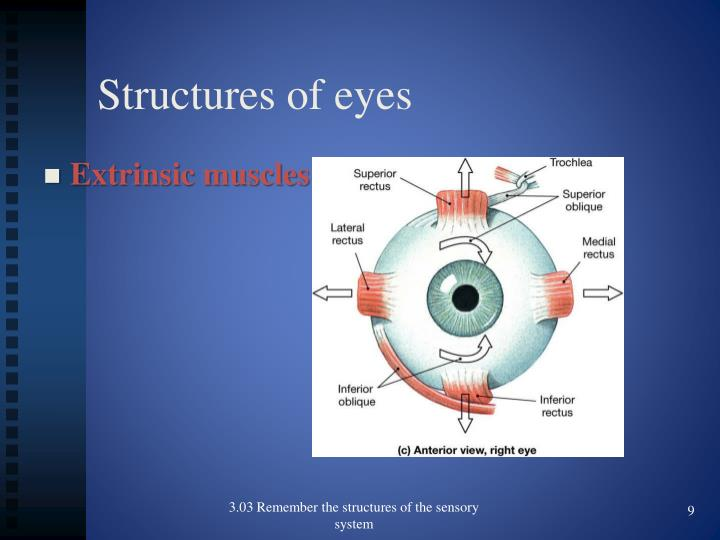 Structures of eyes