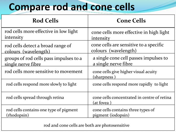 Compare rod and cone cells