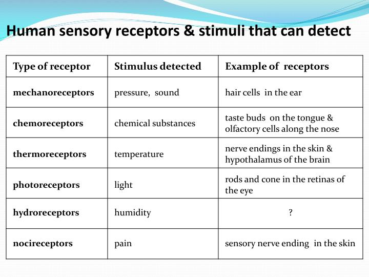 Human sensory receptors stimuli that can detect