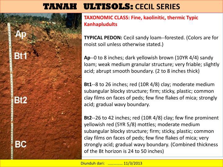 TANAH   ULTISOLS: