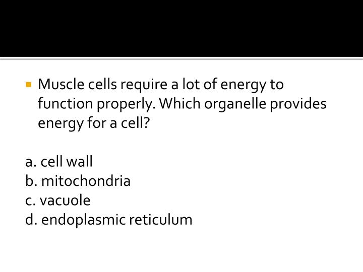 Muscle cells require a lot of energy to function properly. Which organelle provides energy for a cell