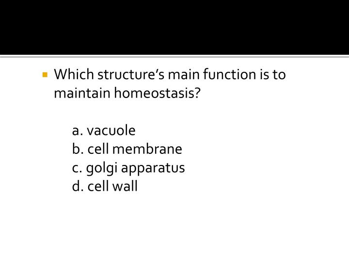 Which structure's main function is to maintain homeostasis