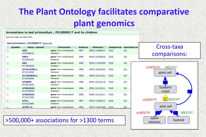 The Plant Ontology