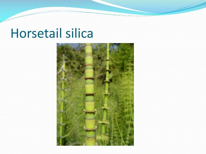 Horsetail silica