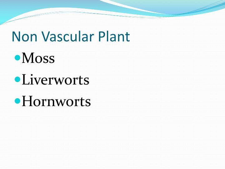 Non Vascular Plant