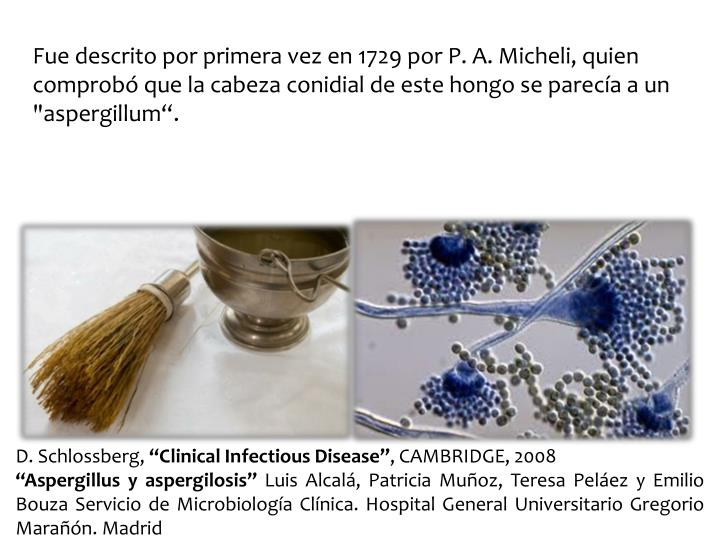 """Fue descrito por primera vez en 1729 por P. A. Micheli, quien comprobó que la cabeza conidial de este hongo se parecía a un """"aspergillum"""