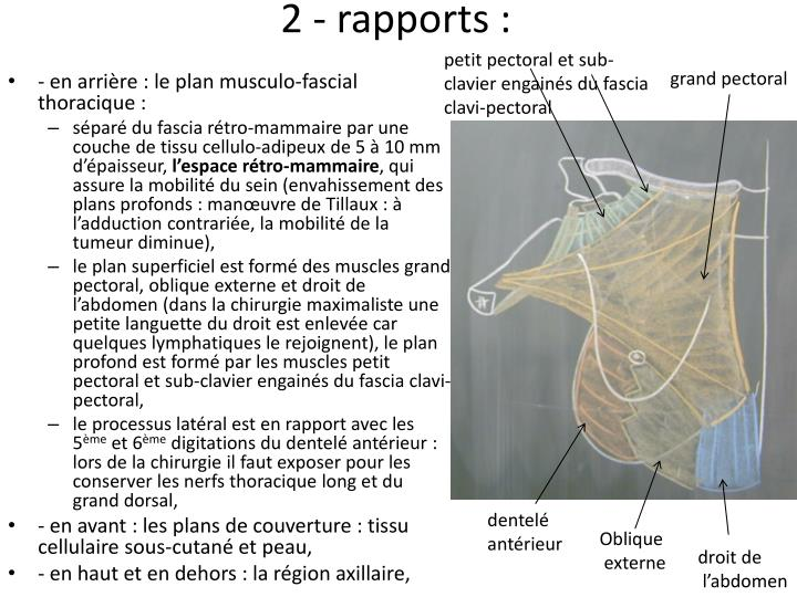 2 - rapports :