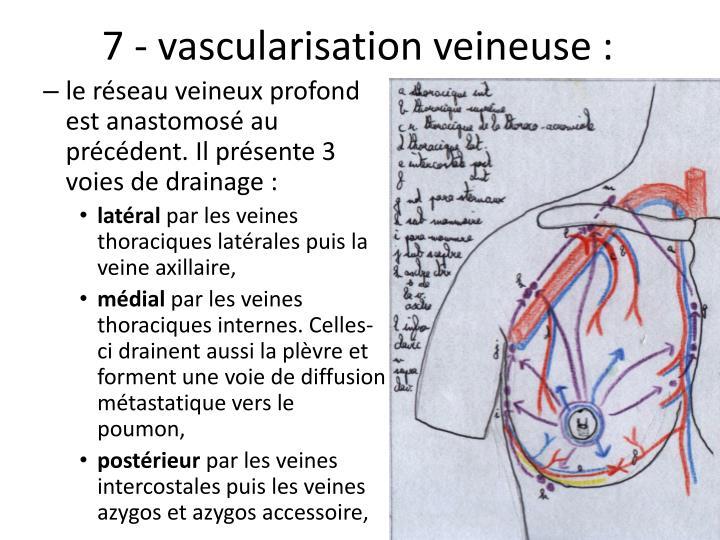 7 - vascularisation veineuse: