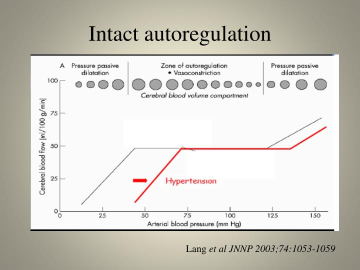 Intact autoregulation