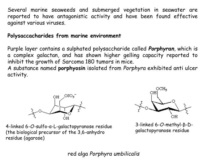 Several marine seaweeds and submerged vegetation in seawater are reported to have antagonistic activity and have been found effective against various viruses.