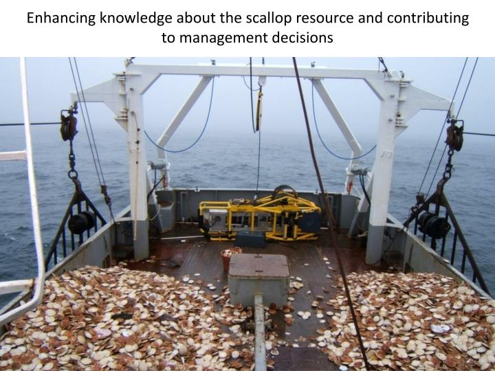 Enhancing knowledge about the scallop resource and contributing