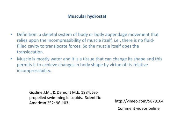 Muscular hydrostat