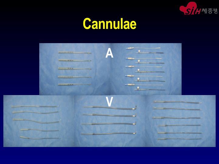Cannulae