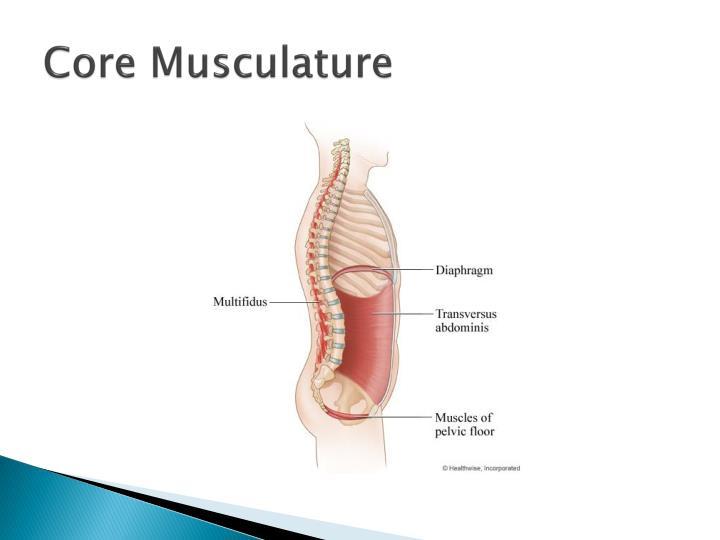 Core Musculature