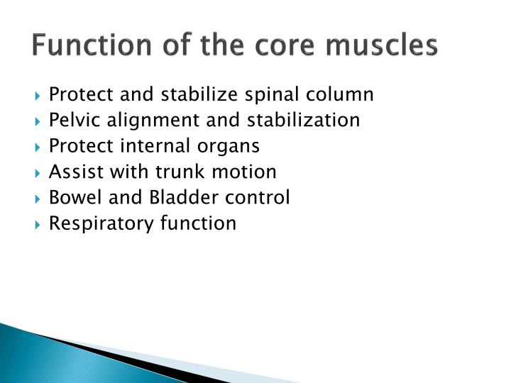Function of the core muscles