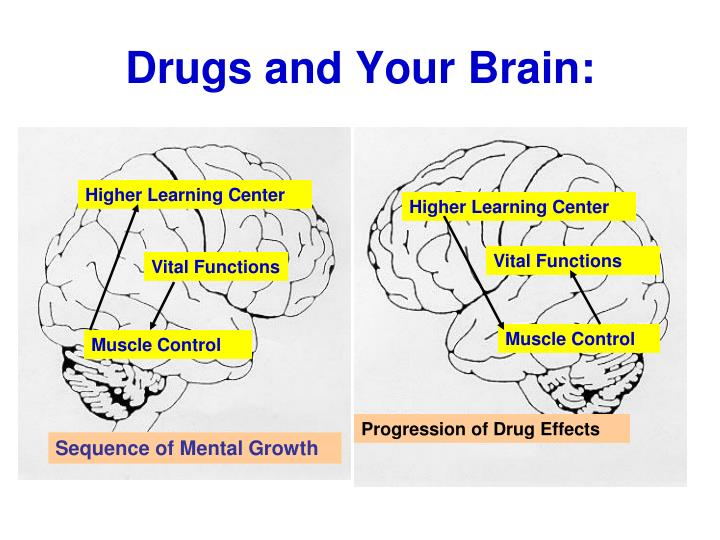 Drugs and Your Brain: