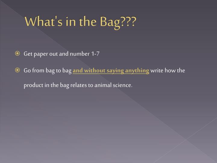 What's in the Bag???