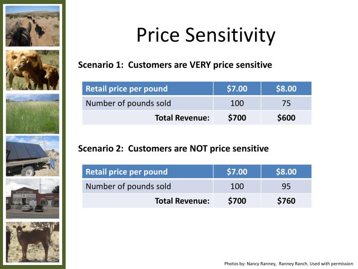 Price Sensitivity
