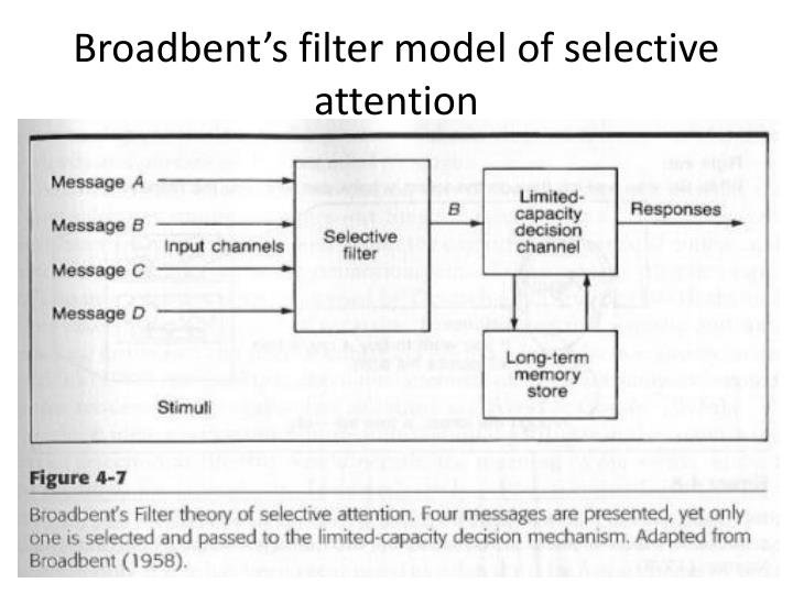 Broadbent's filter model of selective attention