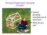 perceptual organization grouping principles