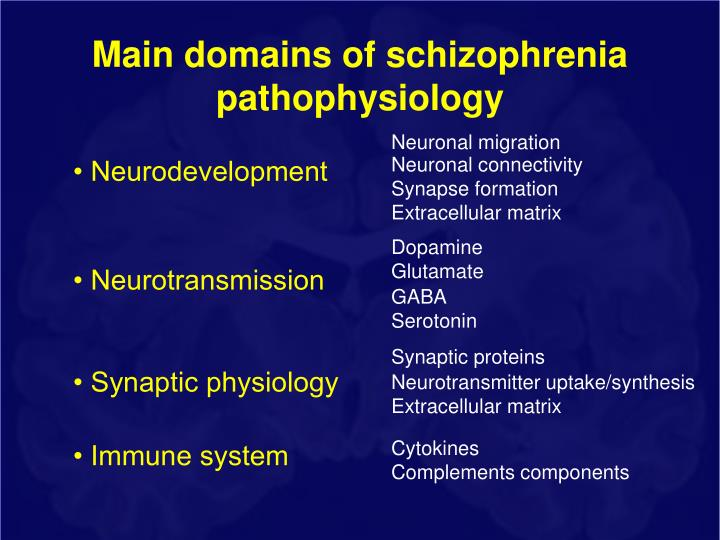 Main domains of schizophrenia pathophysiology