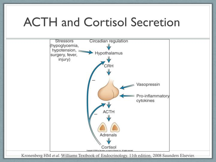 ACTH and Cortisol Secretion