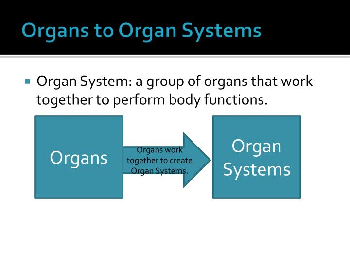 Organs to Organ Systems