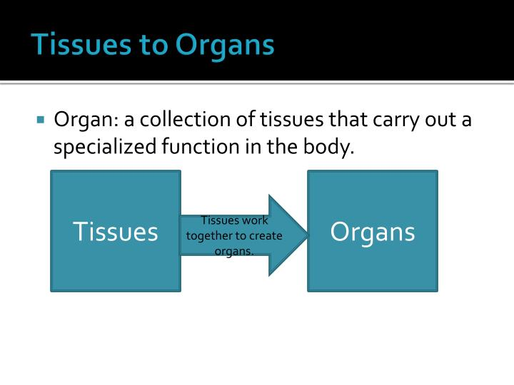 Tissues to Organs