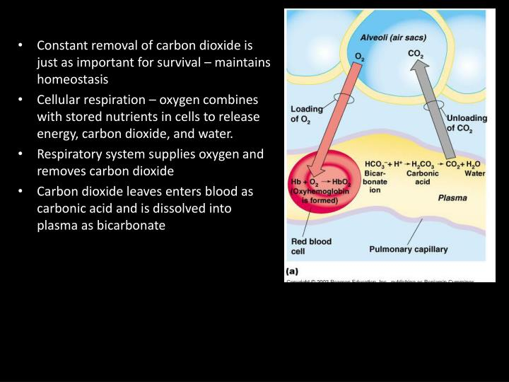 Carbon Dioxide Removal Systems : Ppt respiratory system facts mi of airways