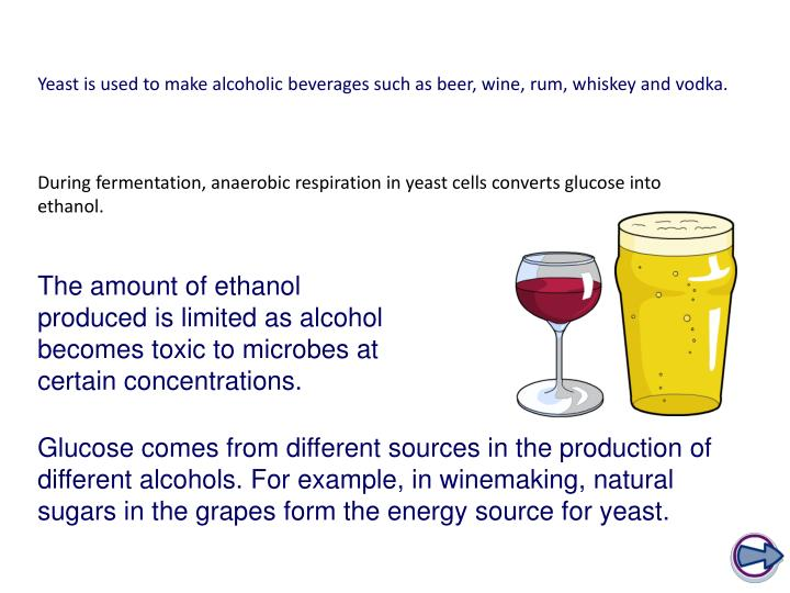 Yeast is used to make alcoholic beverages such as beer, wine, rum, whiskey and vodka.