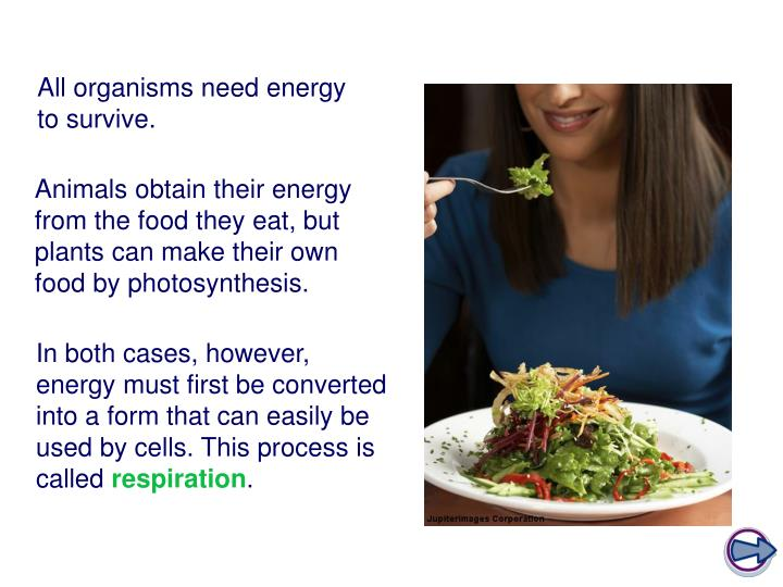All organisms need energy to survive.