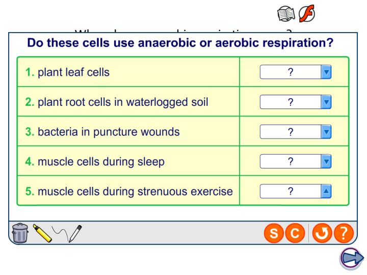 When does anaerobic respiration occur?