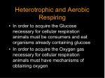 heterotrophic and aerobic respiring