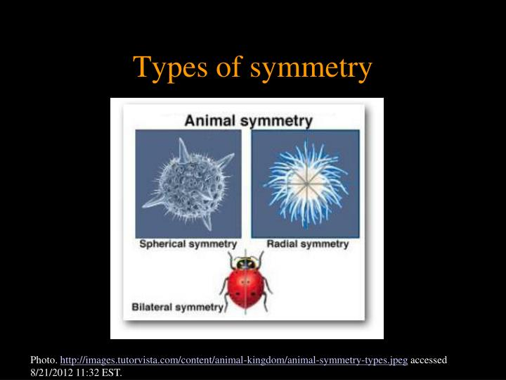 Types of symmetry