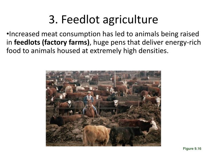 3. Feedlot agriculture