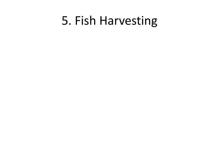 5. Fish Harvesting