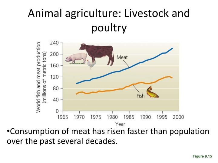 Animal agriculture: Livestock and poultry