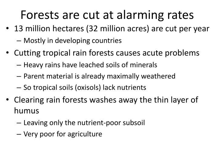 Forests are cut at alarming rates