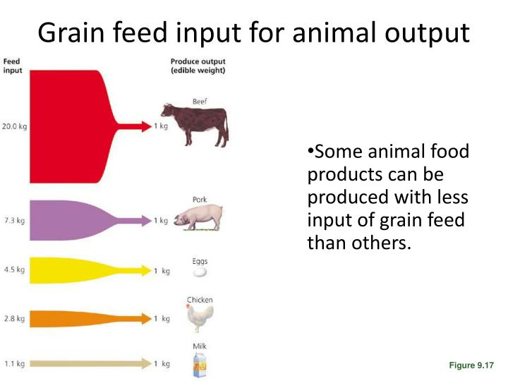 Grain feed input for animal output