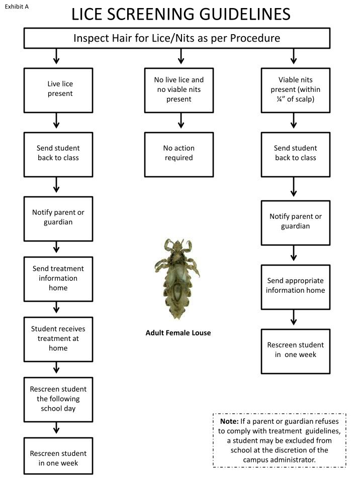 LICE SCREENING GUIDELINES