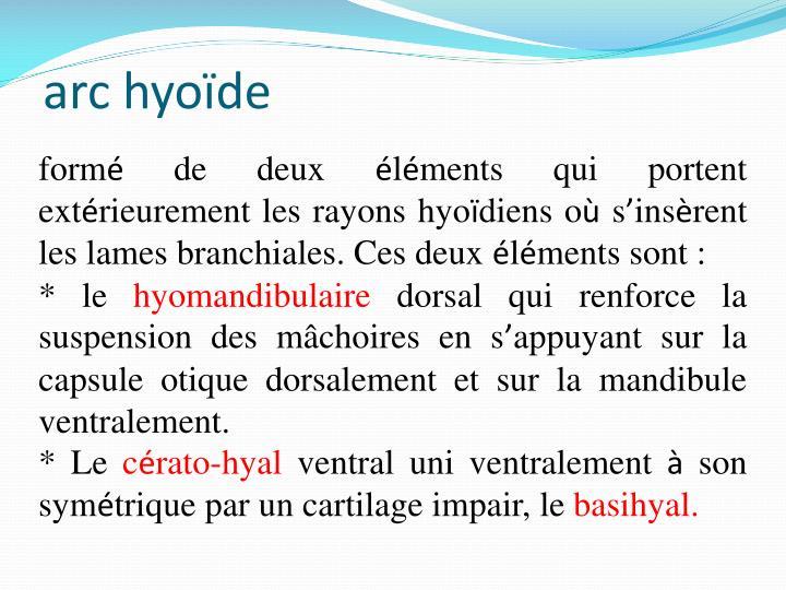 arc hyoïde