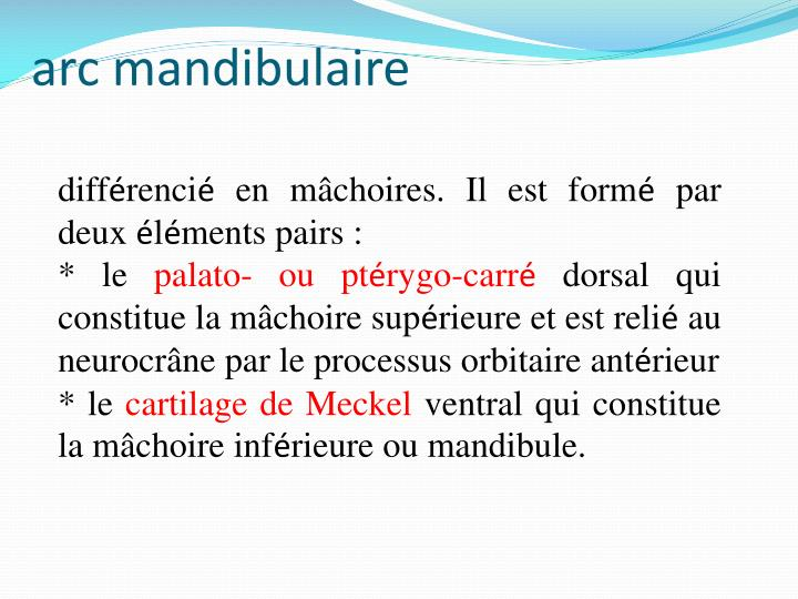 arc mandibulaire