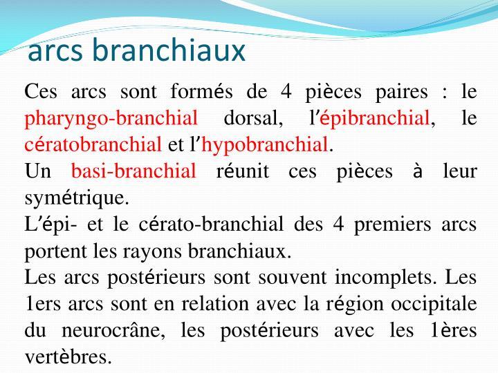 arcs branchiaux