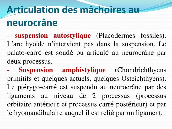 Articulation des mâchoires au neurocrâne