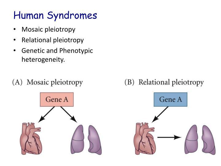 Human Syndromes