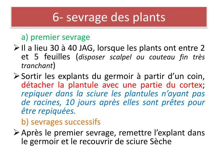 6- sevrage des plants