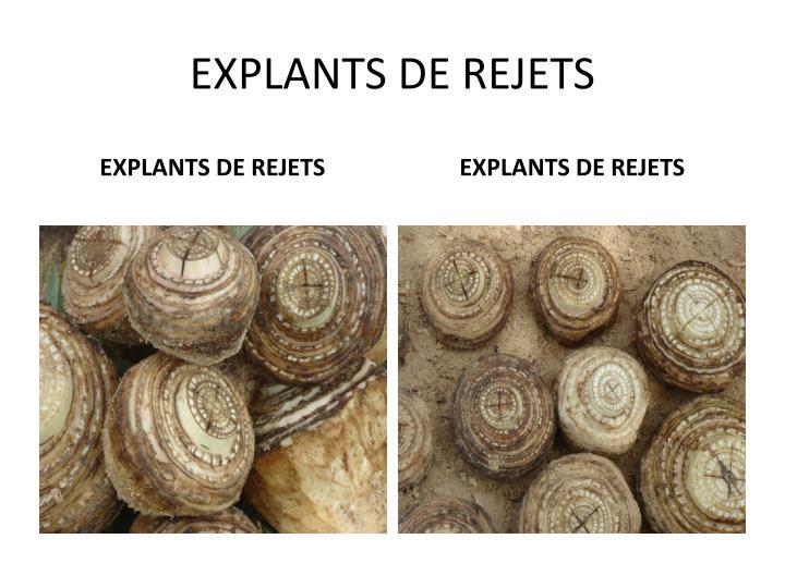 EXPLANTS DE REJETS