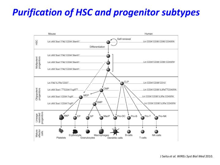 Purification of HSC and progenitor subtypes