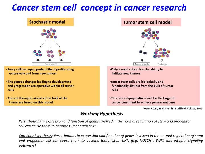 Cancer stem cell  concept in cancer research